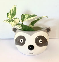 Load image into Gallery viewer, Sloth head Pot
