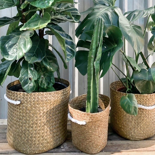Ellie Planter Basket with Rope Handles **HUGE!!