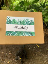 Load image into Gallery viewer, Plant Gift Box, Happy Birthday Gift box, Personalised Plant Gift