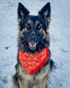 Ruby Romance Frayed Dog Bandana