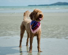 Load image into Gallery viewer, Miami Nights Dog Bandana