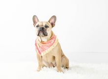Load image into Gallery viewer, Pink Valentine Frayed Dog Bandana