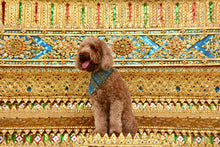 Load image into Gallery viewer, Koh Phi Phi Frayed Dog Bandana