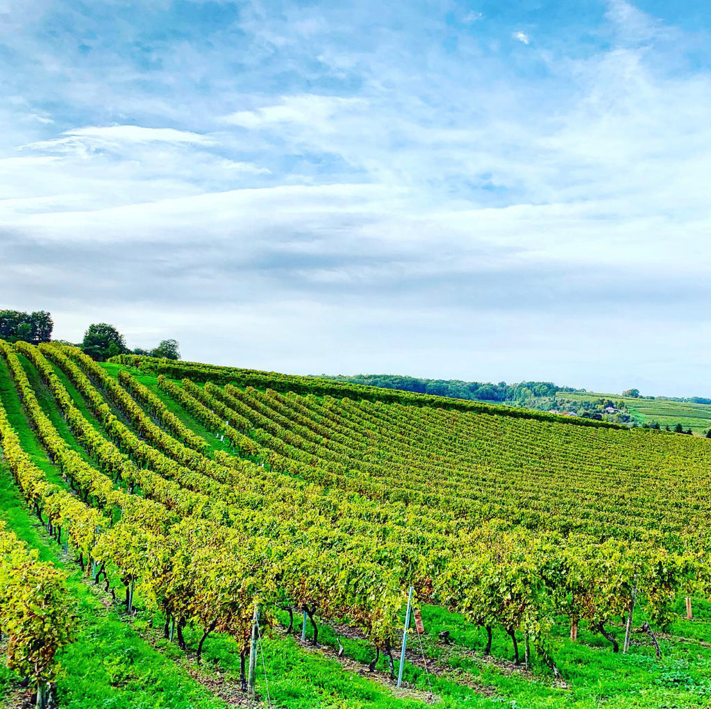 Meet Cognac - The Land of Vineyards by the Sea with a Magnificent Spirit