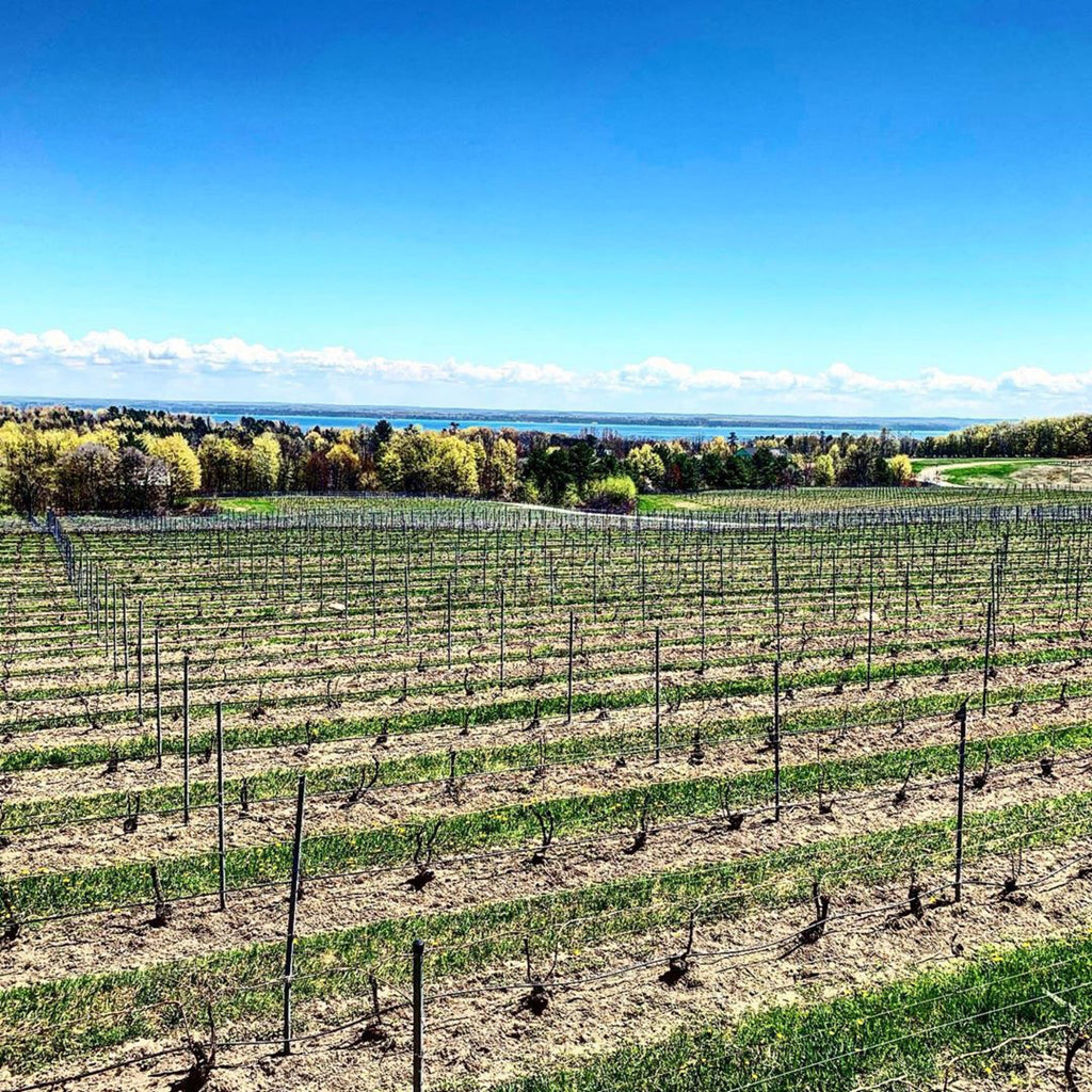 Meet Michigan's Old Mission & Leelanau Peninsulas, the Napa & Sonoma of the Midwest