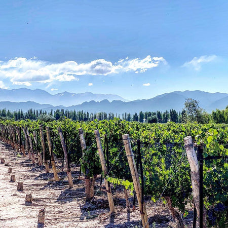 Mendoza, Argentina (All-Inclusive 3d/2n)