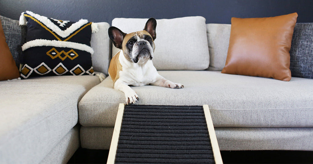 Why Does Your Dog Need a Dog Ramp?