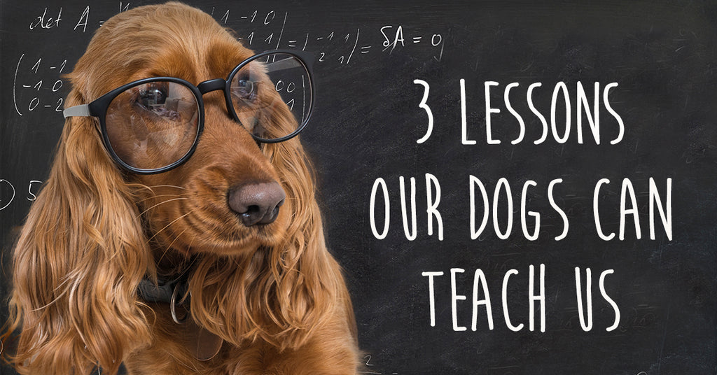 3 Lessons Our Dogs Can Teach Us