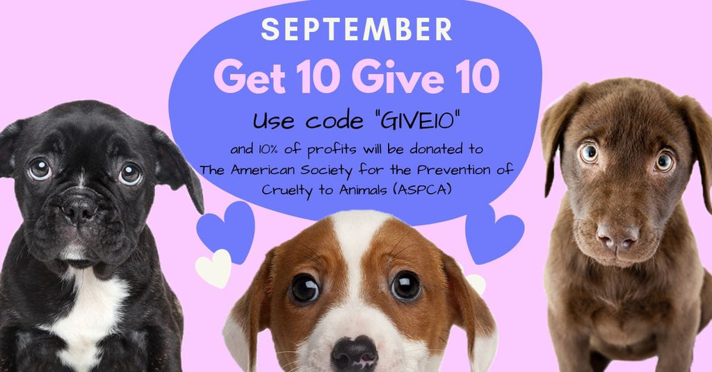 Help a Dog in Need This Month