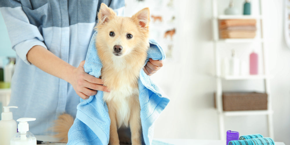 Does Grooming Your Dog Sound Scary