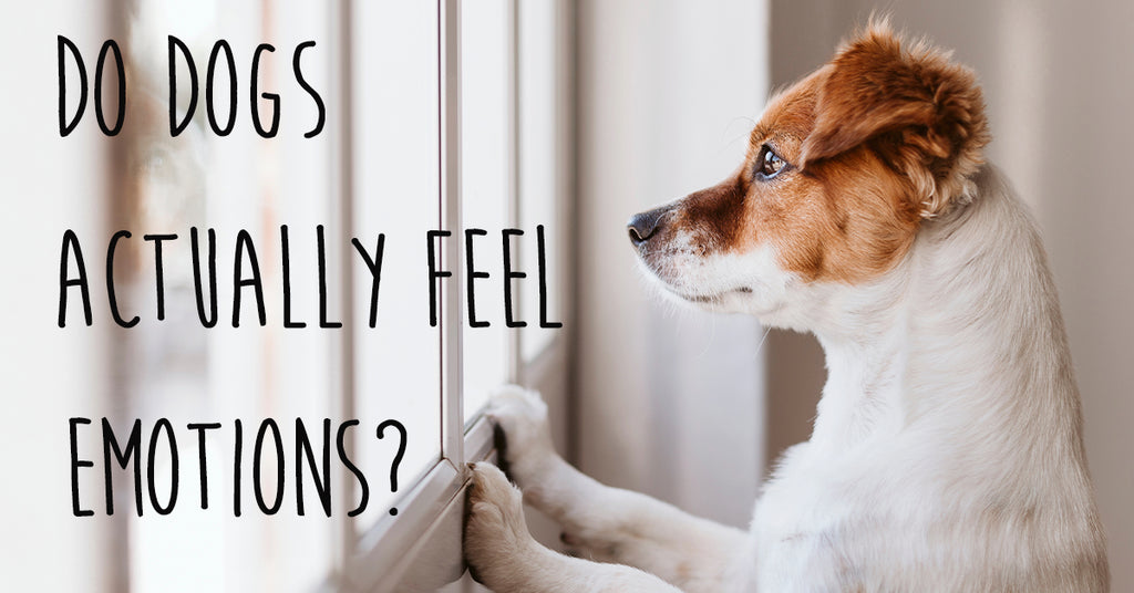 Do Dogs Actually Feel Emotions?