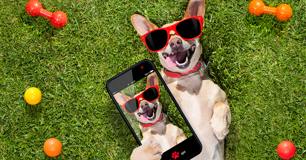How To Turn Your Dog into a Social Media Influencer