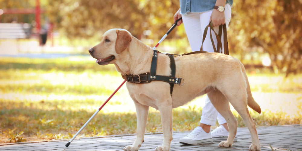 Emotional Support vs. Service dog, what Is The Difference?