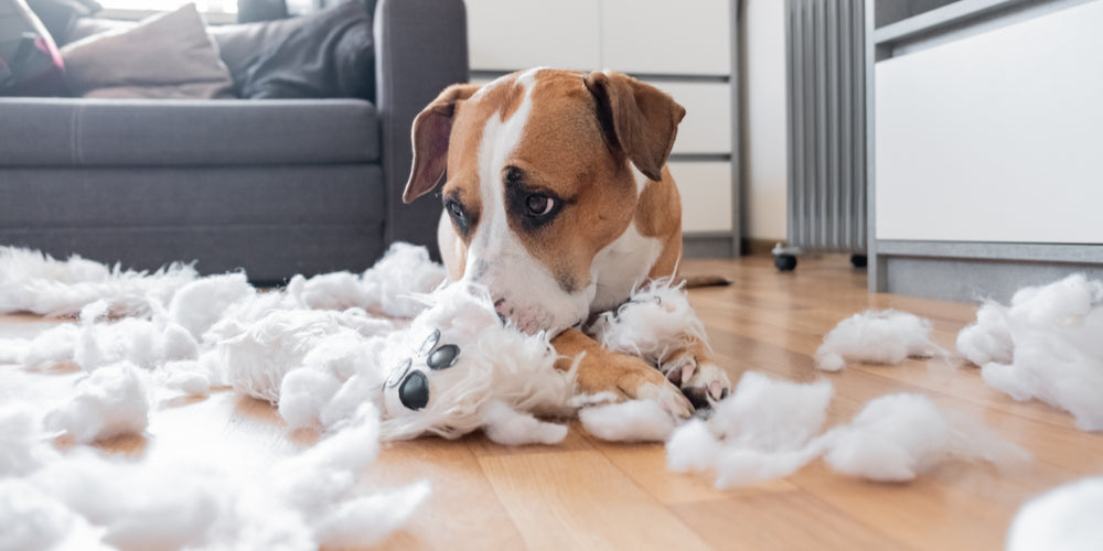 Guilty Dog Destroyed teddy Bear