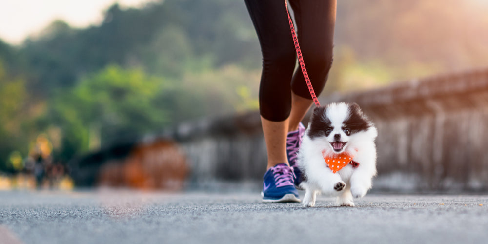 How to help your pup lose weight