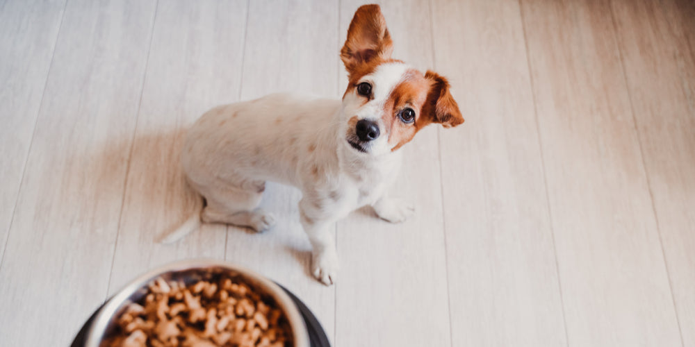 Is your dog a picky eater? Here's why