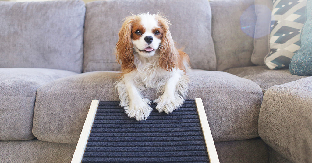 Why Dog Ramps are Better than Dog Stairs