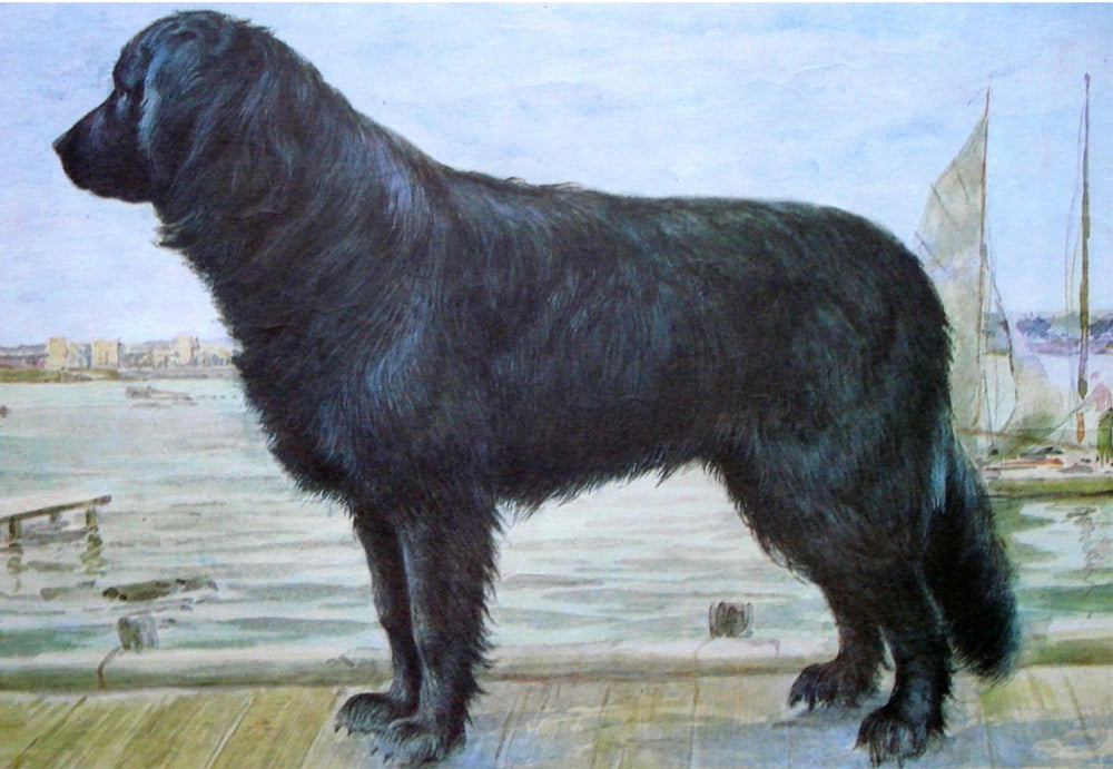 Moscow Water Dog