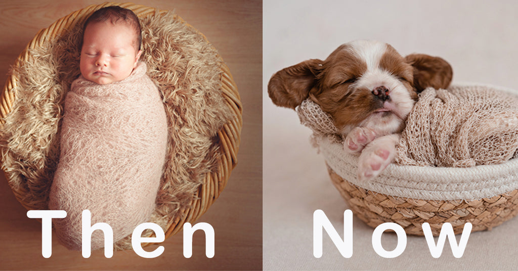 Puppy photoshoots are trending and here's why
