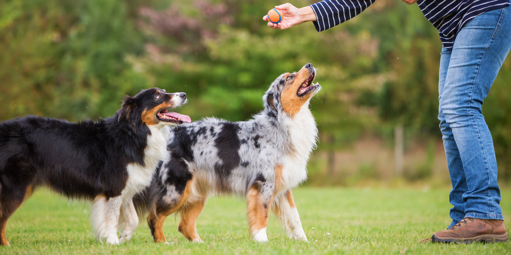 5 Reasons Why Your Dog Doesn't do Well in Training (Hint: It's YOU!)