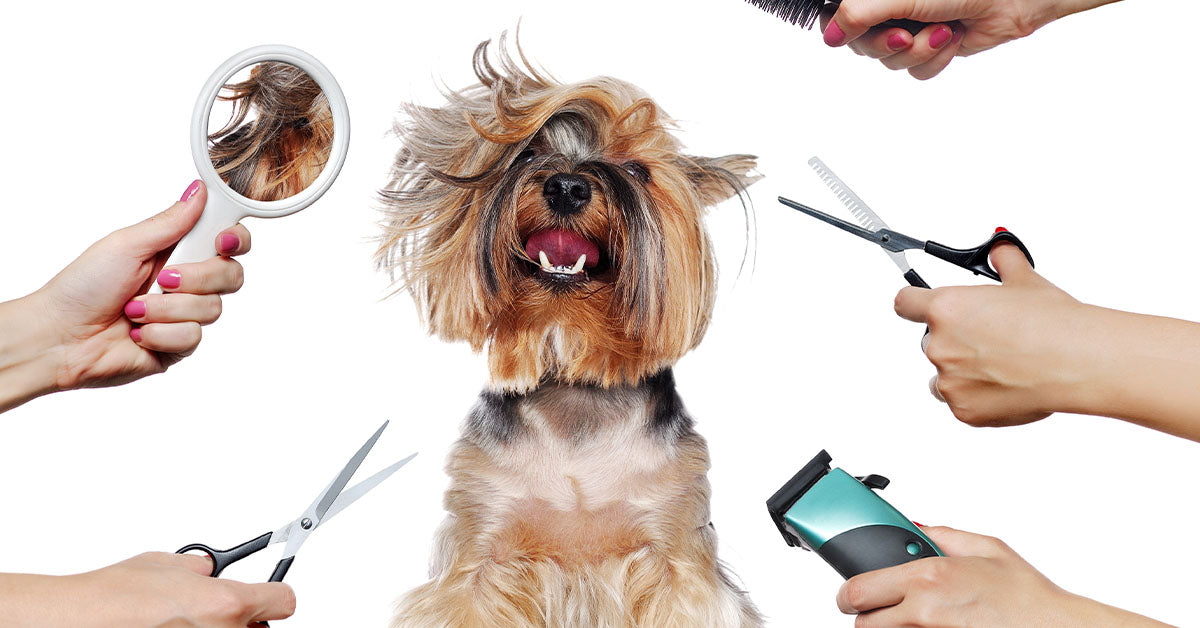 dog grooming guide