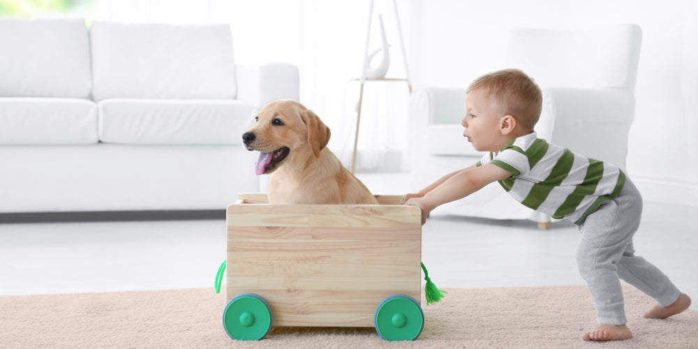 What dog breeds do better with kids?