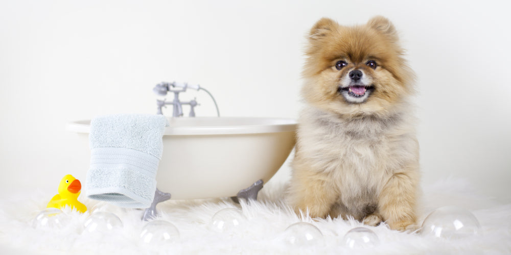 What ingredients to look for in dog grooming products