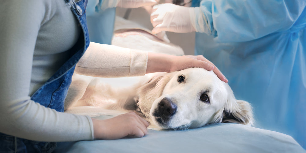 When Should I Drop Everything and Take my Dog to the Hospital?