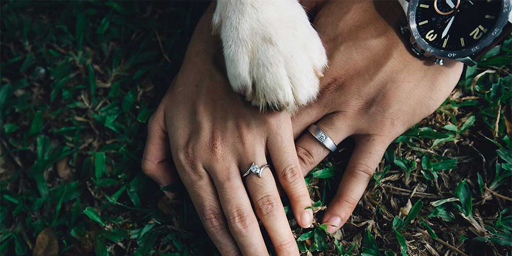 How to Feature Your Dog in Your Wedding: 3 Ideas for the Pawfect Day!