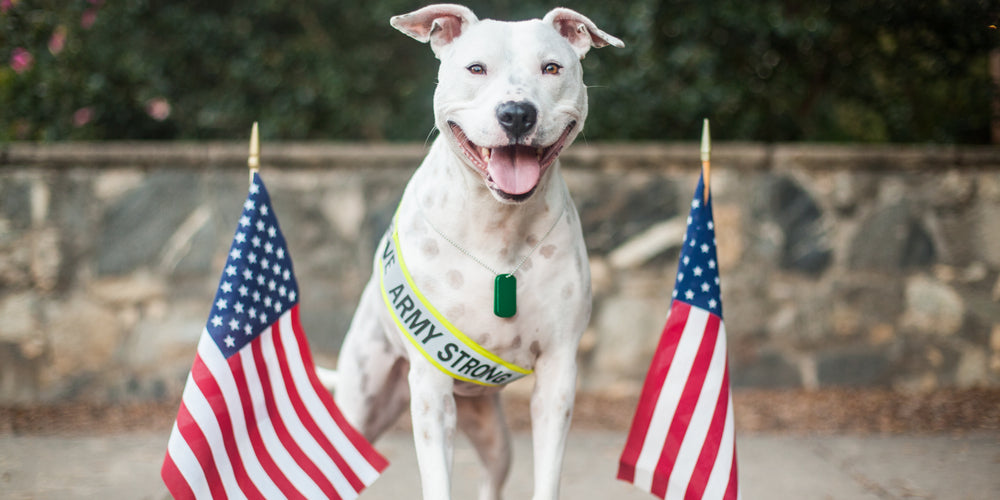 How Dogs Can Help Combat Veterans