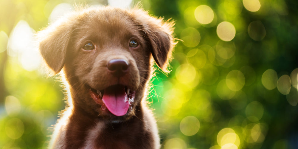 Happy Healthy Canines Can Make for Happy, Healthy Humans