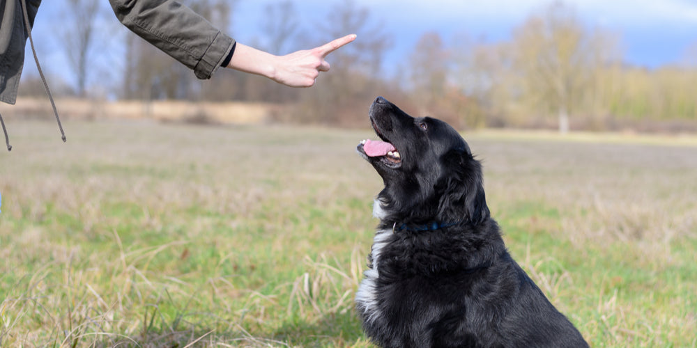 Ultimate Dog Training Guide PawRamp