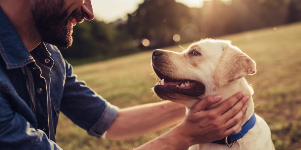 Why We Need Our Dogs - And Vice Versa