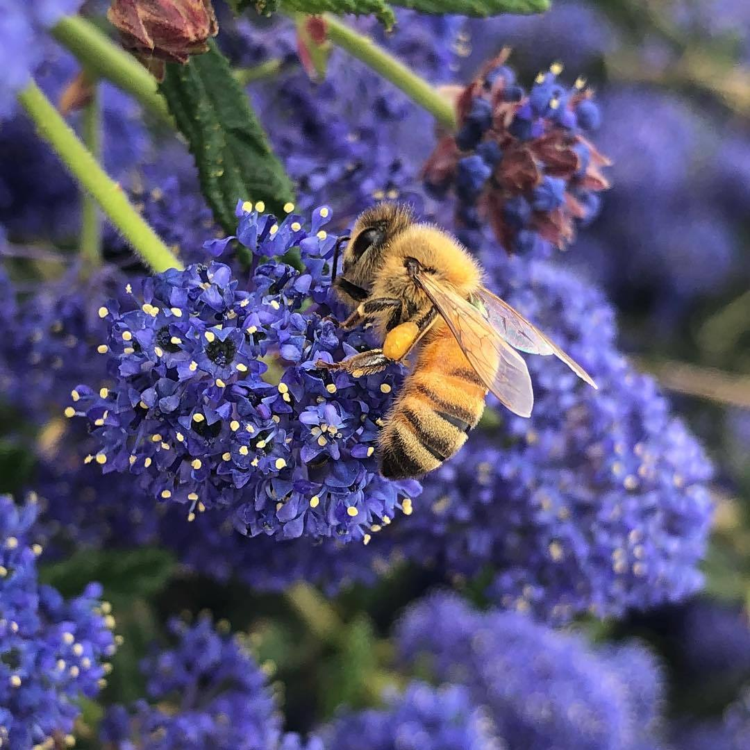 What's The Buzz Around Bees at California's Frog Hollow Farm?