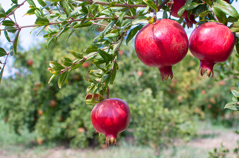 Organic Pomegranate Delivery