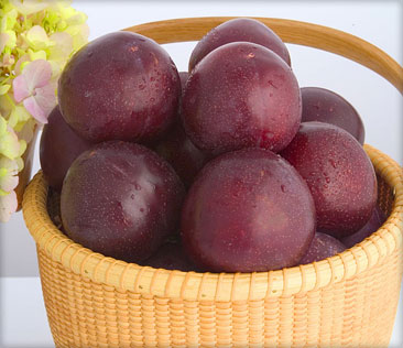 Santa Rosa plums in a basket