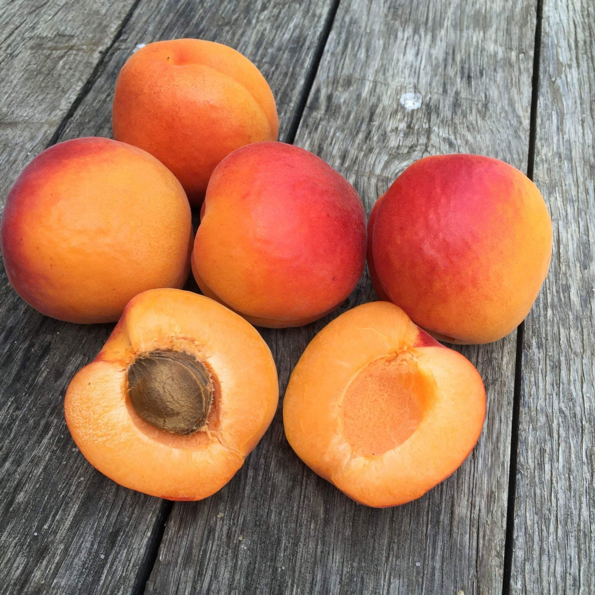2020 Gotta Have My Apricots | Organic Fruit Club | 4 Shipments