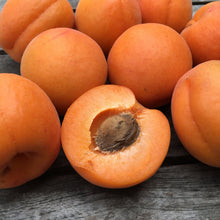 Load image into Gallery viewer, Organic Kettleman Apricots, Fruit Delivery