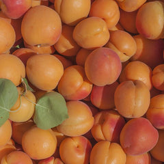 Gotta Have My Apricots | Organic Fruit Club (PRE-ORDER)