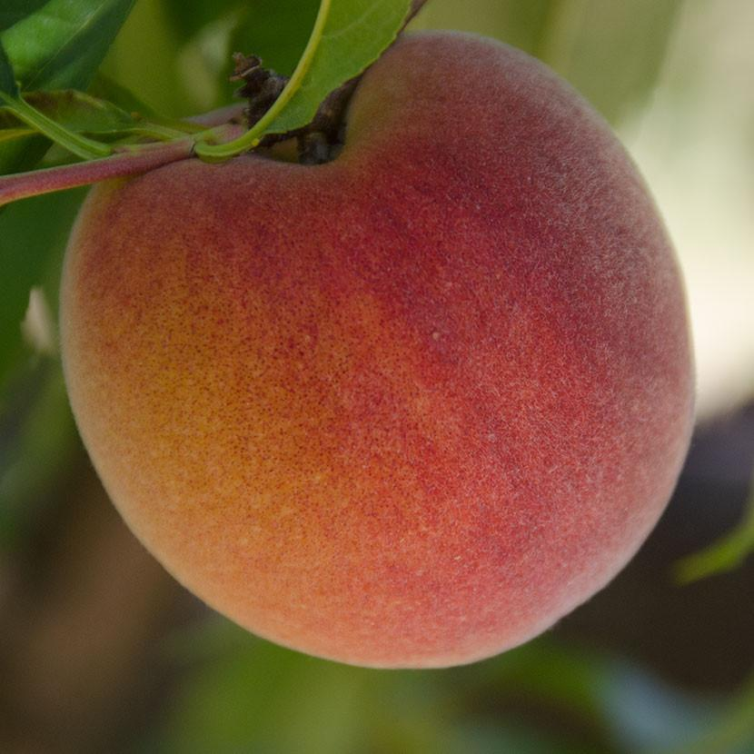 2021 Gotta Have My Peaches | Organic Fruit Club | 12 Shipments
