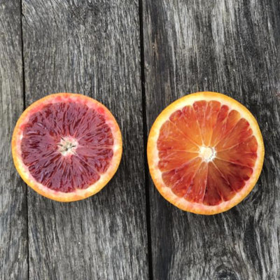 Organic Blood Orange Sampler