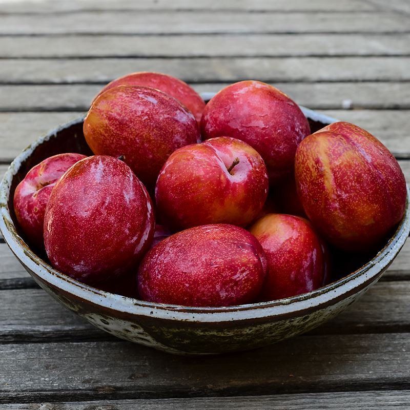 Organic Crimson Royale Pluots [NEW]