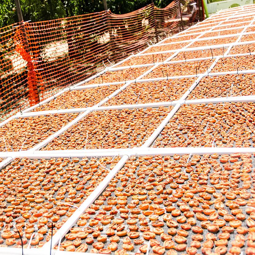 Organic Sun-Dried Golden Sweet Apricots