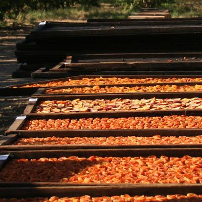 Dried Peaches | Organic Fruit Delivery