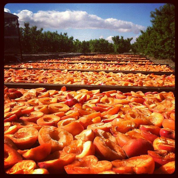 Dried Apricots | Organic Fruit Delivery