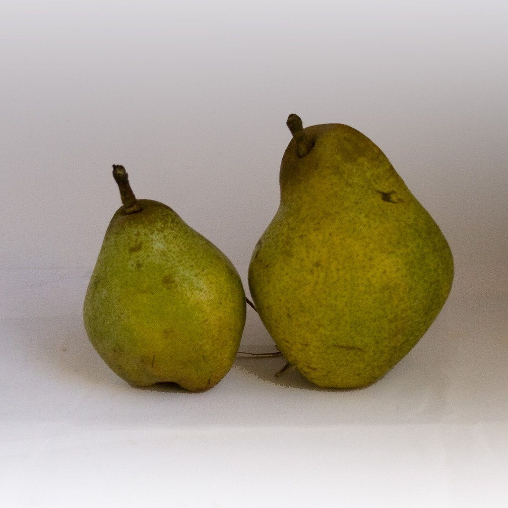 Kid Sized Warren Pears | Organic Pears