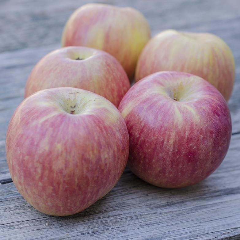 Organic Fuji Apples | Organic Fruit Delivery