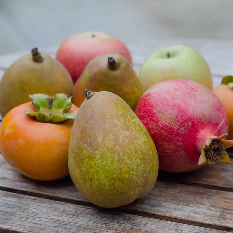 Flavors of Fall | Organic Fruit Delivery