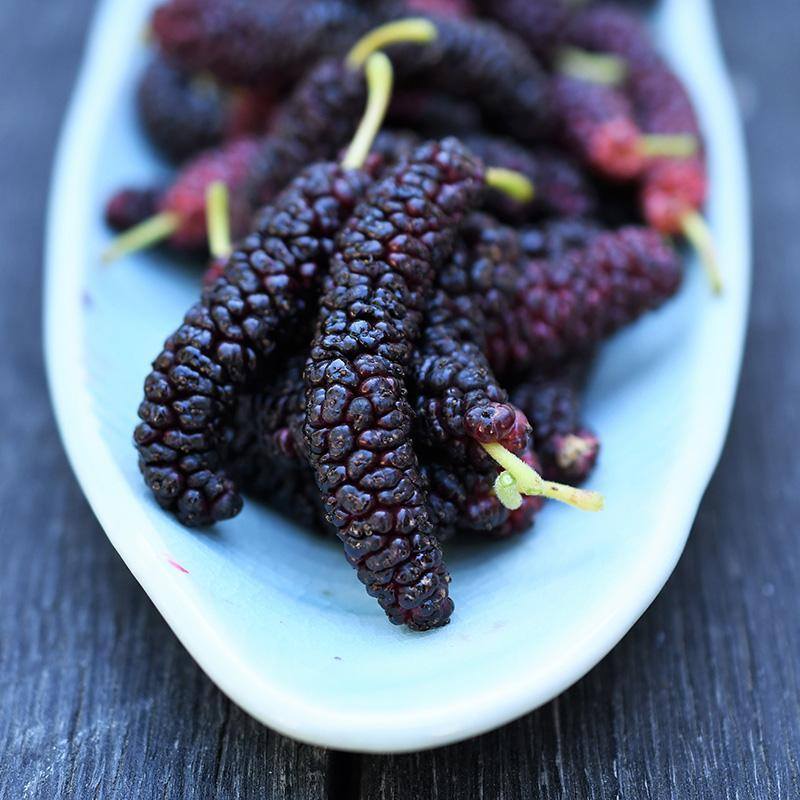 2020 Mulberry Madness | Organic Fruit Club | 4 Shipments