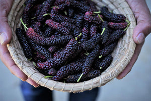 Organic Mulberries | Order Online | Nationwide Delivery